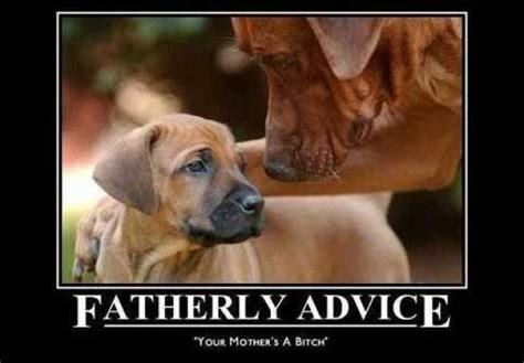 Gay Dog Meme - fatherly advice meme guy