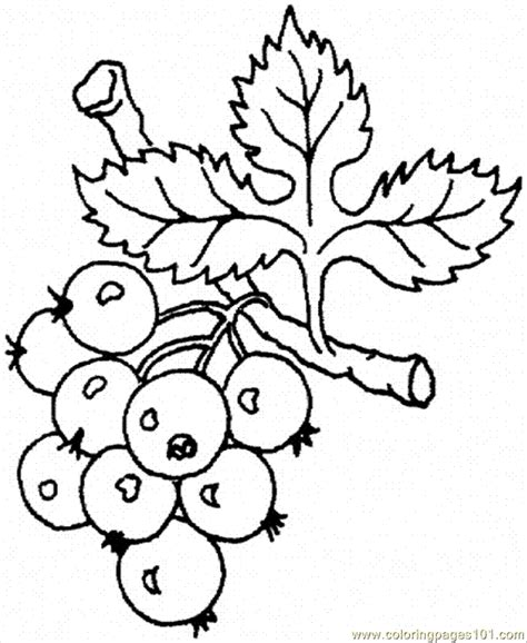 coloring page of grapes on a vine grape vine coloring page coloring pages