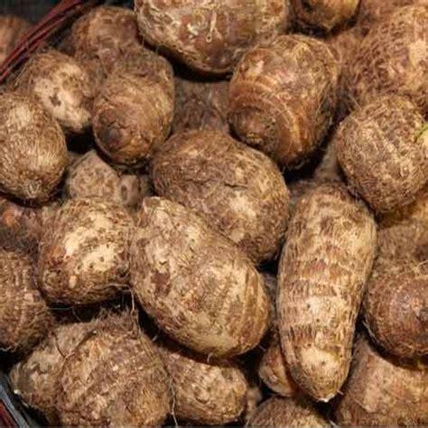 indian root vegetables taro root at rs 22 kilogram new aaloo pyaz mandi
