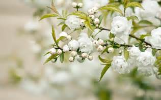 Magnolia Flower Paintings - beautiful white flower weneedfun