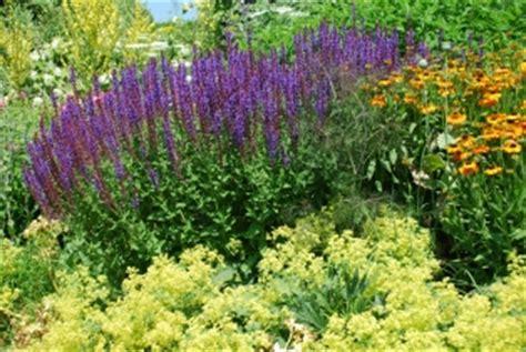 Carol Klein Cottage Garden - perennials and subshrubs perennial market