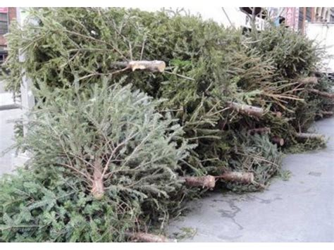 when is curbside christmas tree collection in exeter