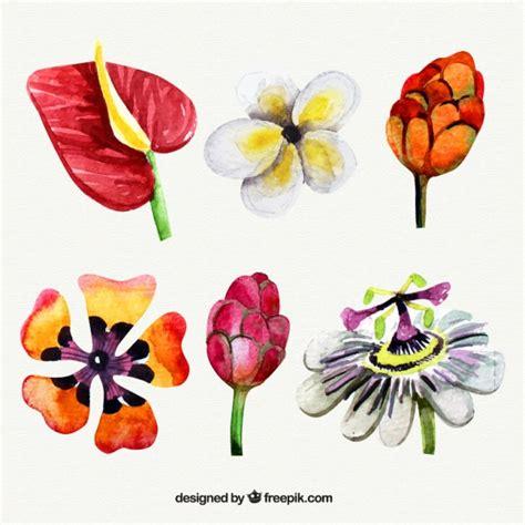 tipo di fiori acquerello tipo di fiori esotici scaricare vettori gratis