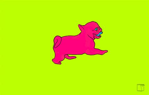 snl pug pugs gifs find on giphy