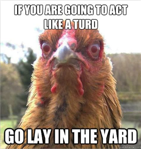 Hen Meme - 27 very funny chicken pictures