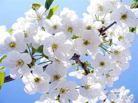imagenes flores blancas flores blancas frescas transform the world artistically