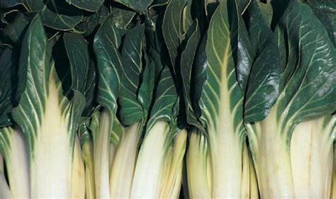 come cucinare le bietole bollite verdure cucina lucana