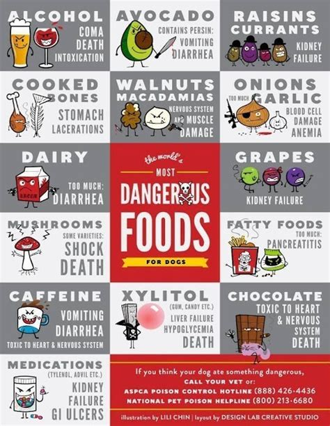 bad for dogs warning these everyday foods could kill your