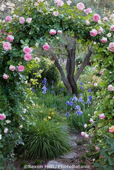 Pink Climbing Rose On Arch Trellis Over Path In Country Secret Flower Garden