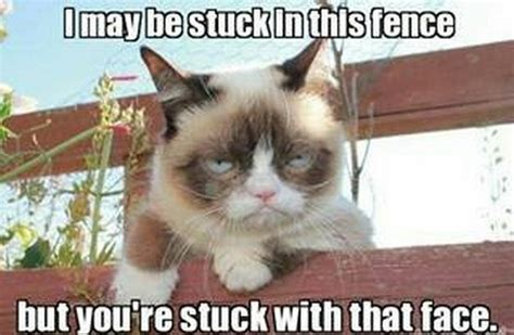 Memes Of Grumpy Cat - 30 very funny grumpy cat meme pictures and photos