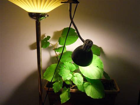 types  grow lights