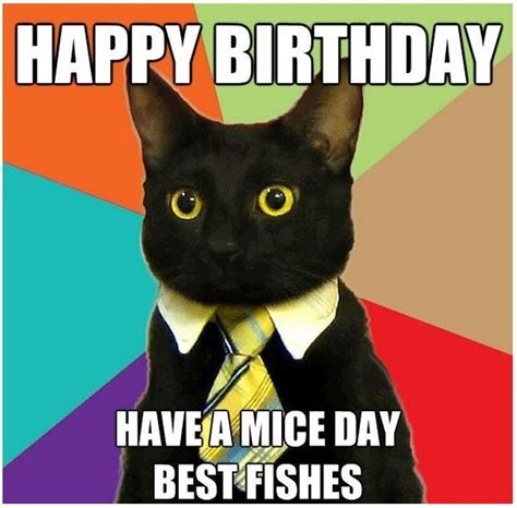 Black Birthday Meme - best 25 cat happy birthday meme ideas on pinterest
