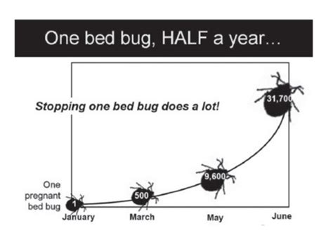 do bed bugs only come out at night bed bugs in schools