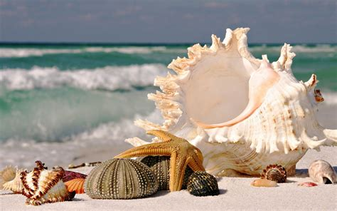 best beaches for seashells best beaches for seashells seashells wallpapers