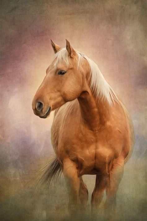 wallpaper iphone 6 horse lindo cavalo wallpaper papel de parede imagem de