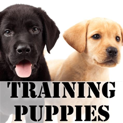 bow wow puppies bow wow week tips for bringing new puppies home crate