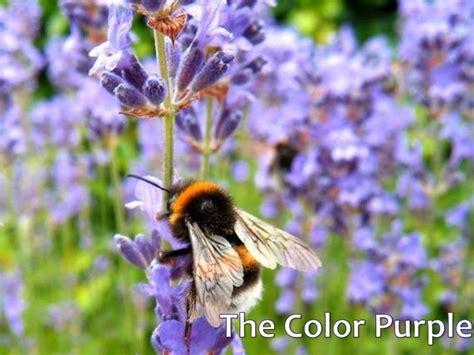 The Color Purple Essay Topics by Essay The Color Purple