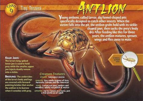 doodlebug insect wiki antlion wierd n creatures wiki fandom powered by