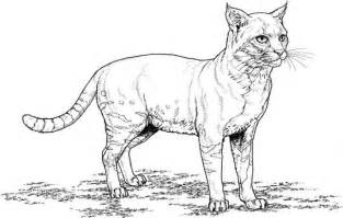 Realistic Cat Coloring Pages realistic cat coloring pages bestofcoloring