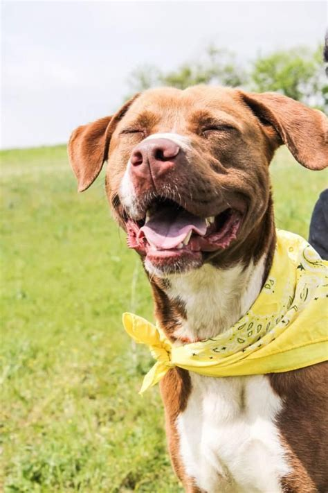 www petfinder dogs 1000 images about adoptable pets in the dallas ft worth