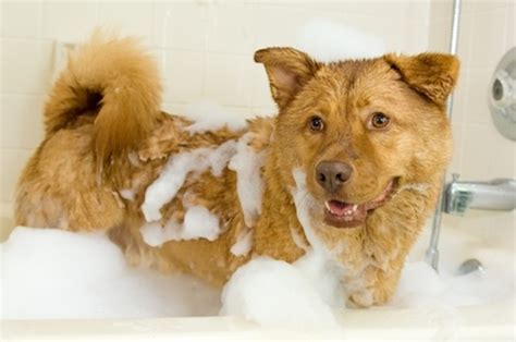 make bathtime fun for your dog making bath time fun earthbath