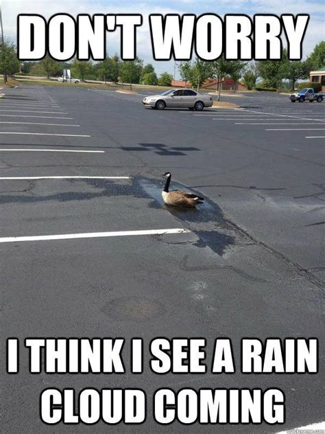 Funny Rain Memes - funny rain pictures with quotes www pixshark com