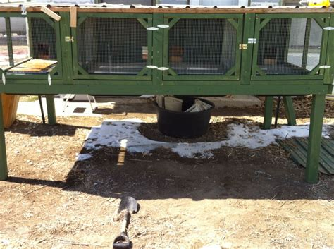 backyard ducks housing call duck housing ideas needed