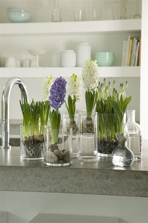 homes decoration ideas spring decorating ideas refresh your home with spring flowering bulbs