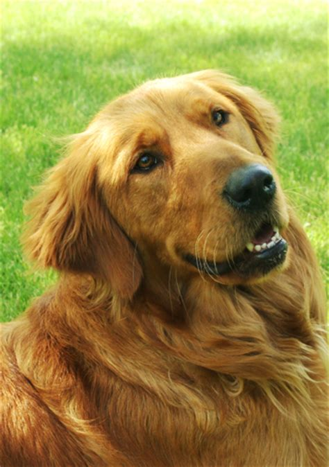 how to qualify for a service service dogs for america how to apply faqs