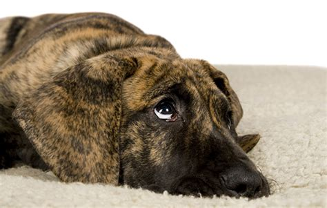 dogs urinating in house why is your pet urinating in the house pet health central