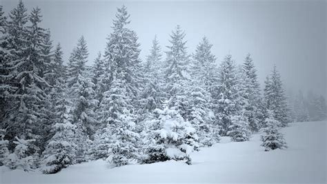 snow covered fir trees in mountains stock footage video