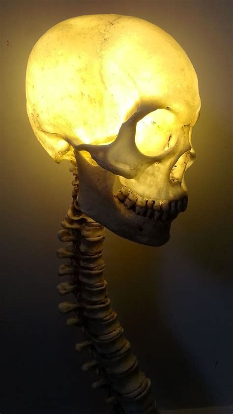 Skull Lights by 17 Best Images About Awesome Lighting On