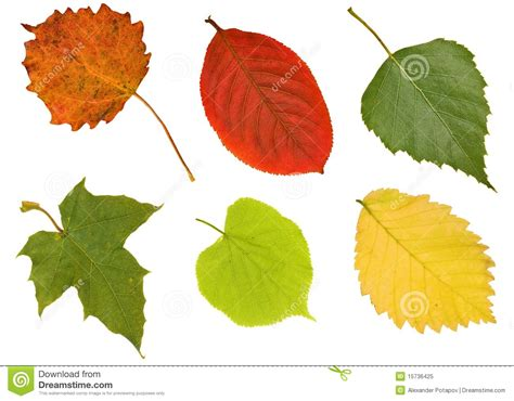 Different Names Of Green six different leaves on white royalty free stock photo