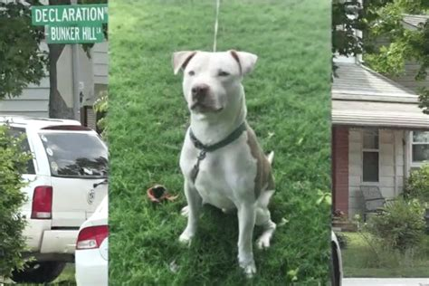 pitbull puppies va 90 year virginia mauled to by pit bull 30 minutes after