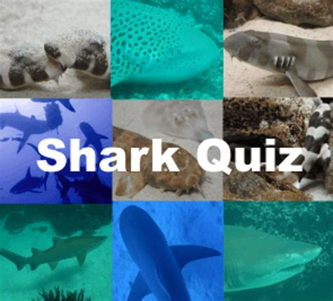what are you quiz shark quizzes