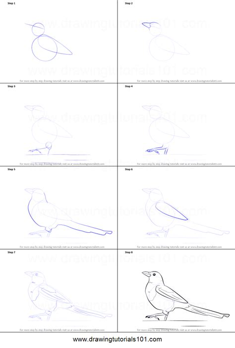 how to draw a doodle step by step how to draw a magpie printable step by step drawing sheet