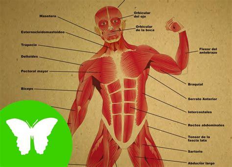 imagenes educativas del cuerpo humano la eduteca los m 250 sculos youtube