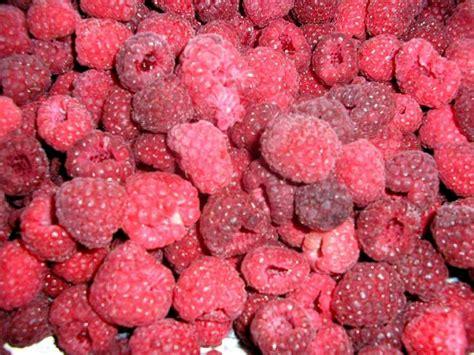 Iqf Frozen Raspberry 1kg uren novaberry ltd