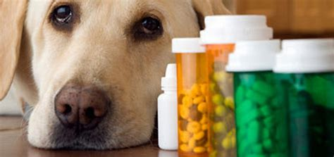 best vitamins for dogs 10 best health supplements for overall health