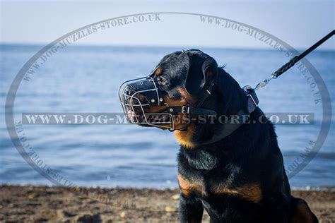 rottweiler cage size cage muzzle for rottweiler rottweiler muzzles uk 163 28 98