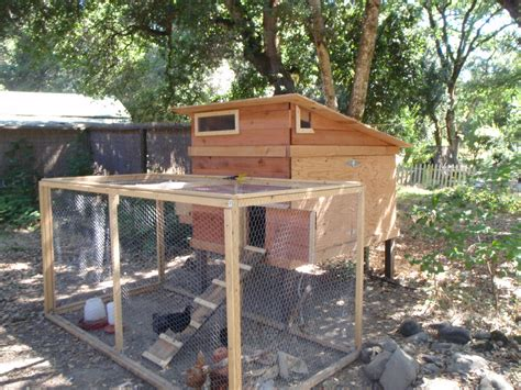 can i have chickens in my backyard chicken coops the top 5 requirements