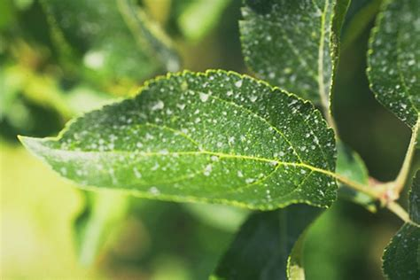 plant disease pictures plant disease management