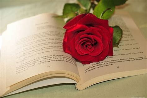 libro the rose and the libro abierto rosa imagen libre de 4 free fotos