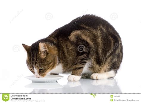 Cat Dreams Of Fish Birds Milk by Cat Milk 2 Royalty Free Stock Photography Image