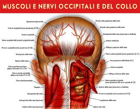 muscoli testa nevralgia occipitale cosa bisogna sapere