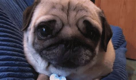 happy puppy gif happy puppy gif find on giphy