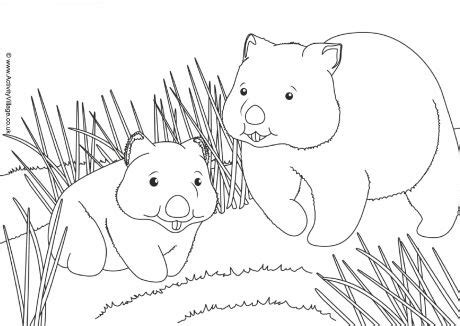 Search Results For Advent Scene Colouring Page Wombat Coloring Page