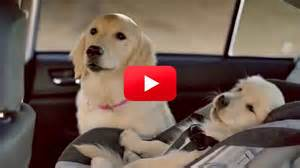 Subaru Commercial With Dogs Subaru Commercial With Dogs Autos Post