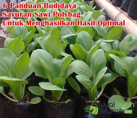Growing Plant For Panduan Untuk Peduli Mengenal budidaya sawi polybag jualbenihmurah