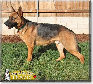 what was travis alexanders dogs name travis german shepherd dog may 20 2007